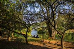Parco São Paulo April venticinquesimo Brasile di Ibirapuera immagini stock libere da diritti