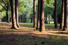 Parco São Paulo April venticinquesimo di Ibirapuera immagine stock