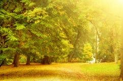 Parco soleggiato di autunno Immagine Stock