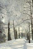 Parco soleggiato di inverno, vicolo della betulla, verticale fotografia stock libera da diritti
