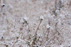 Parco sotto una prima neve Fotografia Stock