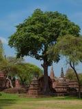 Parco storico di Ayutthaya di si di Phra Nakhon thailand fotografie stock libere da diritti