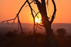 parco Sudafrica di Kruger di aumento di tramonto Fotografia Stock