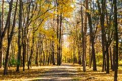 Parco sull'autunno Fotografia Stock