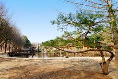Parco sull'isola di Namiseom Fotografia Stock Libera da Diritti