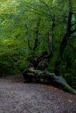 Parco tedesco di autunno della natura Fotografie Stock