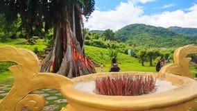 parco tropicale con il fiore-letto gigante dell'albero dei percorsi in grande vaso video d archivio