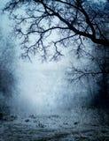 Parco in una nebbia Fotografia Stock Libera da Diritti