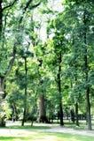 Parco verde Immagini Stock
