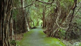Parco verde Immagine Stock Libera da Diritti