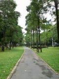 Parco verde Alberi verdi Fotografie Stock