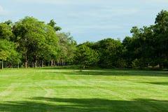 Parco verde in città Immagine Stock