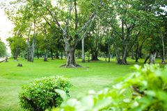 Parco verde del giardino con l'albero nella mattina di estate Immagini Stock