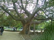 Parco verde dell'albero fotografia stock libera da diritti