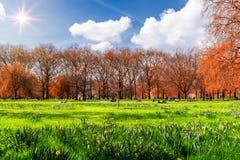 Parco verde a Londra durante il giorno di molla caldo La gente che si siede sulla t Fotografia Stock Libera da Diritti
