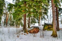 Parco Vyborg Russia di repos di lunedì Fotografia Stock