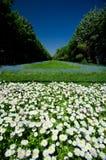 Parcs de Bucarest et jardins - Cismigiu Images libres de droits