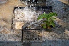 Parcs et trou d'eau gravé par faune Photo stock