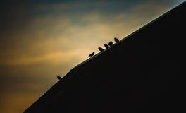 Pardais que sentam-se na parte superior do telhado Foto de Stock