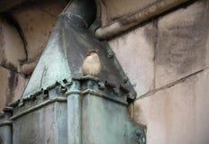 Pardal no conduto de cobre da chaminé Imagens de Stock Royalty Free