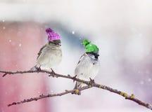 Pardal pequeno de dois pássaros que senta-se em uma árvore no jardim no wond imagem de stock royalty free