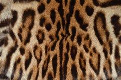 Pardelkatzepelzhintergrund Stockfoto