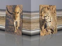 Pardus del Panthera del leopardo con el fondo africano