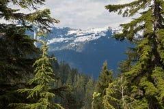 pardwy góra Vancouver Obraz Royalty Free