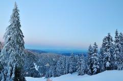 pardwy góry zima Obraz Stock