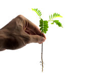 Pare el destruir de árboles Imagen de archivo libre de regalías