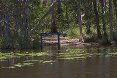 Pare fora do ponto nos pantanais de Noosa com lillypads Fotografia de Stock Royalty Free