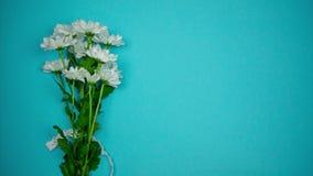 Pare la animación del movimiento de los crisantemos blancos con la cinta del cordón en fondo azul metrajes