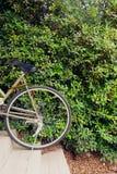 Pare la bici en la pared verde de las hojas Imágenes de archivo libres de regalías