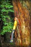 Pare la tala de árboles Imágenes de archivo libres de regalías