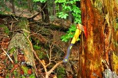 Pare la tala de árboles Fotografía de archivo libre de regalías