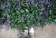 Pare no jardim Imagem de Stock Royalty Free