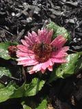 Pare y huela las flores Foto de archivo libre de regalías