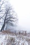 Parecchi alberi accanto allo stagno nella mattina nebbiosa Fotografie Stock Libere da Diritti