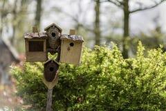 Parecchi aviari e un alimentatore dell'uccello Immagini Stock Libere da Diritti