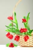 Parecchi tulipani rossi in cestino Fotografie Stock Libere da Diritti