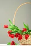Parecchi tulipani rossi in cestino Immagini Stock