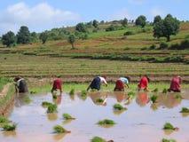 Parecchie donne del coltivatore fotografia stock