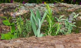 Parecchie erbe curative o spezia della cucina in una linea Fotografia Stock