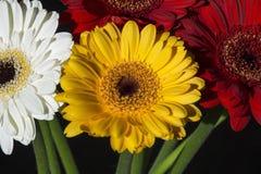 Parecchie gerbere colourful come mazzo Fotografia Stock Libera da Diritti