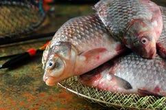 Parecchio galleggiante crucian della gabbia della canna da pesca Fotografia Stock Libera da Diritti