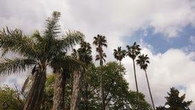 Parecchio genere di palme tropicali scosse dal vento in un giorno di estate video d archivio