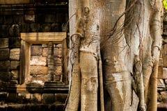 Parecer del árbol elefante en el castillo Imagen de archivo libre de regalías