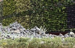 Pared adornada bien natural diseñada por la planta, la flor y el primero plano rocoso imagen de archivo