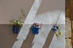 Pared adornada con las plantas en los potes Fotos de archivo libres de regalías