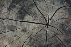 Pared agrietada de madera del círculo Imagenes de archivo